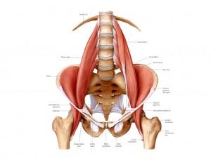 腰椎,骨盤,腸腰筋