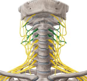 頚椎,神経