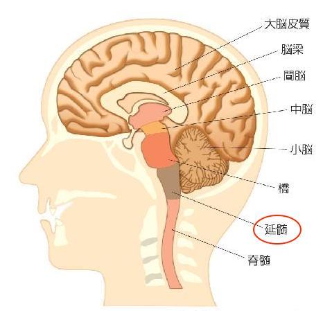 首の付け根,神経,延髄
