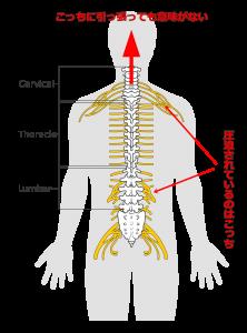 脊髄神経,牽引