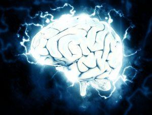 脳,脳神経